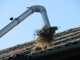 clean my gutters
